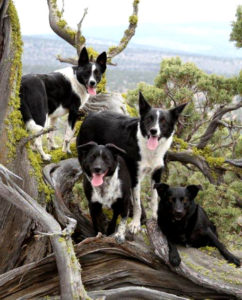 dogs-in-tree